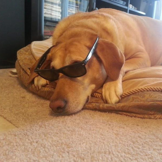 Adina - Animal Assisted Therapy Dog, dog with sunglasses on